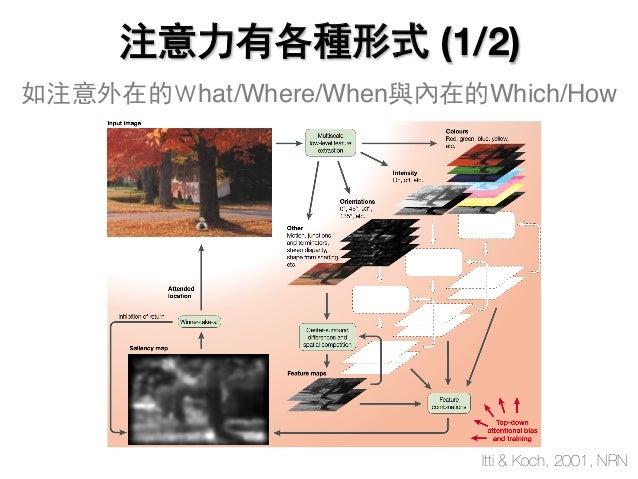 注意力有各種形式 (1/2) Itti & Koch, 2001, NRN 如注意外在的What/Where/When與內在的Which/How