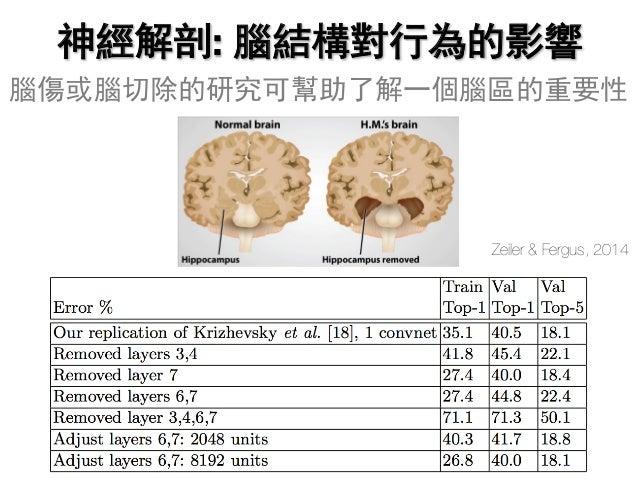 神經解剖: 腦結構對行為的影響 腦傷或腦切除的研究可幫助了解一個腦區的重要性 Zeiler & Fergus, 2014