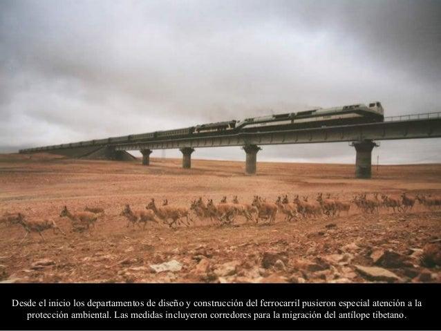 Otras especies, como osos y asnos salvajes se han adaptado exitosamente a la presencia de la línea ferroviaria y su tráfic...