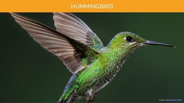 HUMMINGBIRD Credit: mikebaird on Flickr