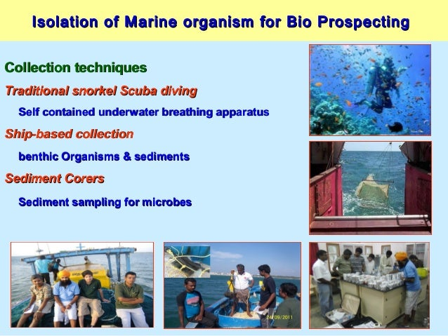 Isolation of Marine organism for Bio ProspectingIsolation of Marine organism for Bio Prospecting Collection techniquesColl...