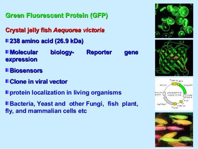Marine NutraceuticalsMarine Nutraceuticals Omega-3 fatty acids eicosapentaenoicOmega-3 fatty acids eicosapentaenoic acid (...