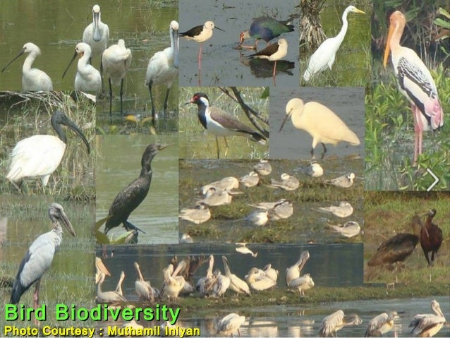 Bird BiodiversityBird Biodiversity Photo Courtesy : Muthamil IniyanPhoto Courtesy : Muthamil Iniyan