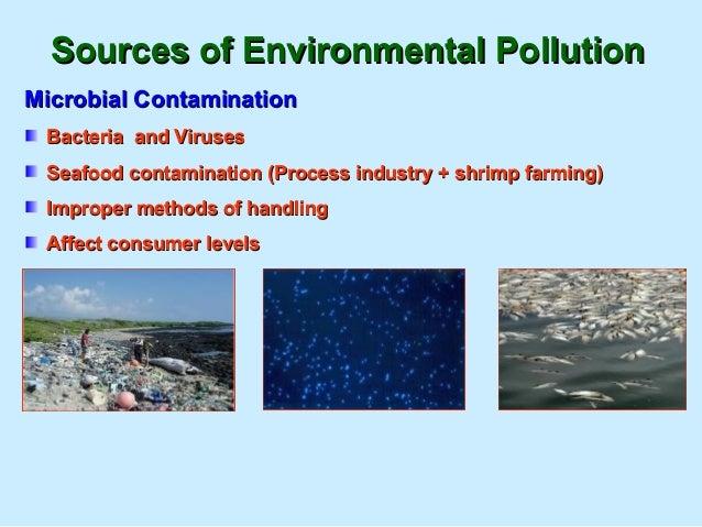 Impact of polythene bags & plasticsImpact of polythene bags & plastics 100 type of birds100 type of birds 31 types of sea ...