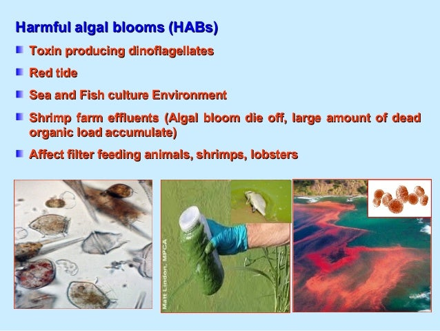 Role of Marine Biotechnology on Environmental PollutionRole of Marine Biotechnology on Environmental Pollution Bioremediat...