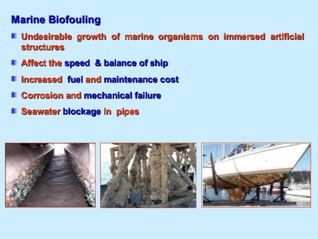 AntifoulingAntifouling Anti-fouling paint or bottom paint is a specialized coating applied to the hull of a ship or boat i...