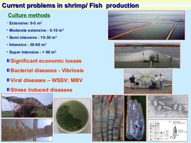 Algal Drugs- Antiviral & Immunostimulants SeaweedsSeaweeds Broad spectrum of activities antiviral, anthelmintic, antifunga...