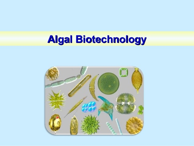 ALGAL OIL PRODUCTIONALGAL OIL PRODUCTION Storing the Sun's Energy (Photosynthesis) What is needed Storage of Energy Sunlig...