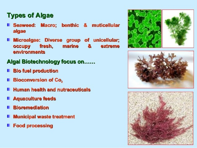 How to produce more oils ?How to produce more oils ? The lipid content of an algae species can be increased by imposing a ...