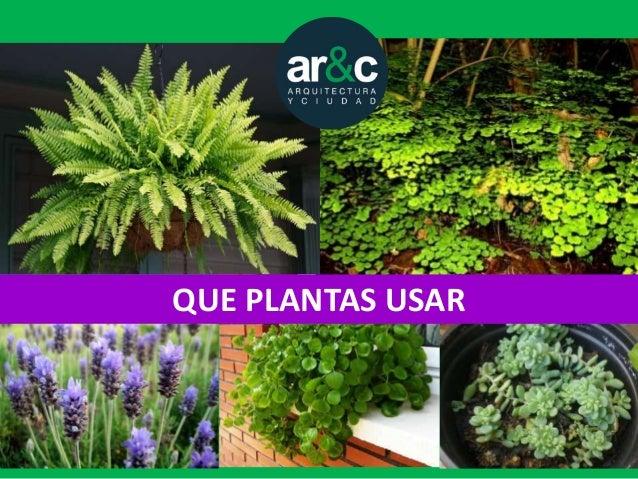Tres alternativas baratas para un jardin vertical for Plantas jardin baratas