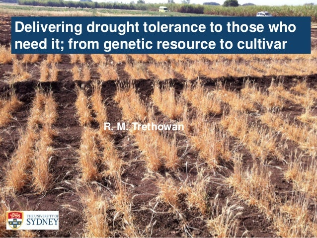1 Delivering drought tolerance to those who need it; from genetic resource to cultivar R. M. Trethowan
