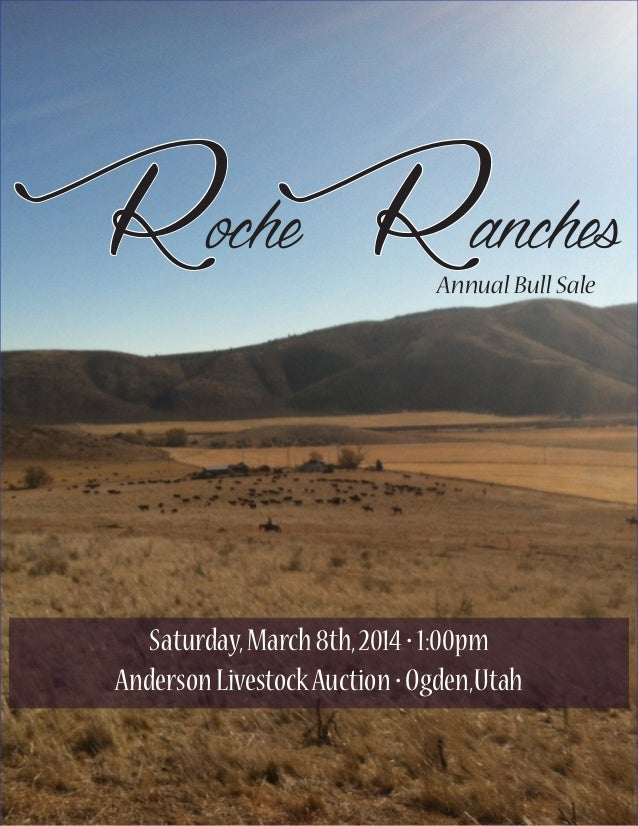 Yearling Bull Sale for Roche Cattle Company
