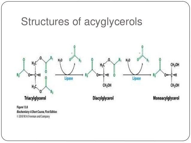 triacylglycerol-6-638.jpg?cb=1478082203