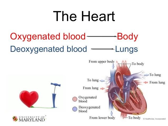 Understanding the Heart Triage