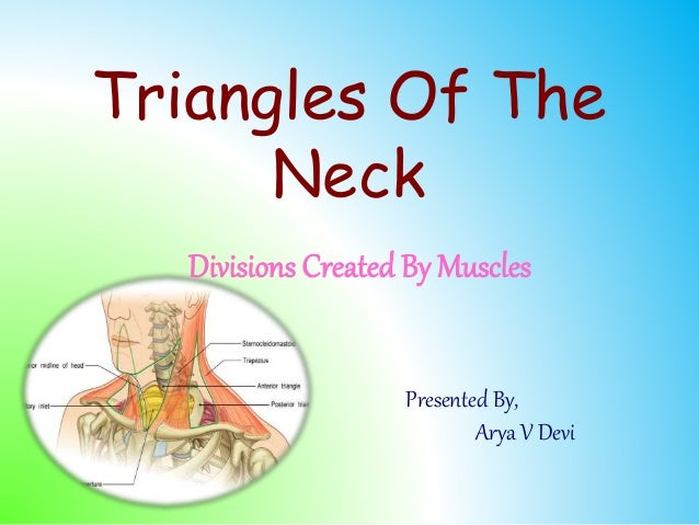 Triangles Of The Neck Divisions Created By Muscles Presented By, Arya V Devi