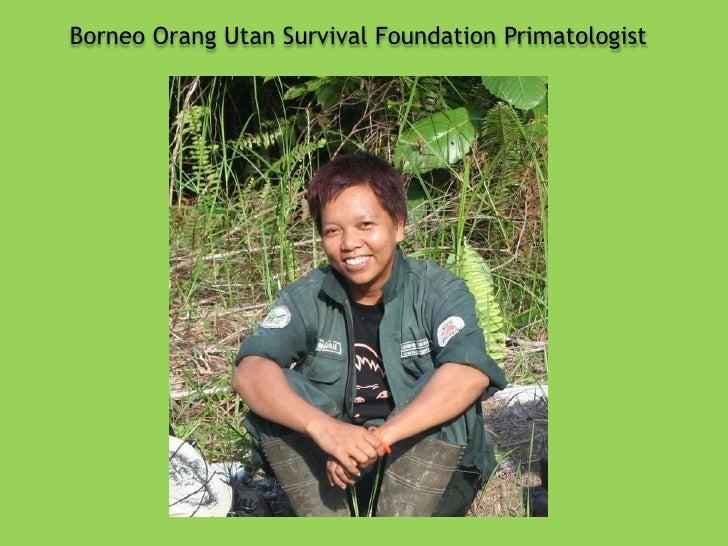 Borneo Orang Utan Survival Foundation Primatologist <br />