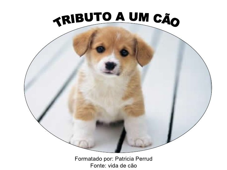 TRIBUTO A UM CÃO Formatado por: Patricia Perrud Fonte: vida de cão