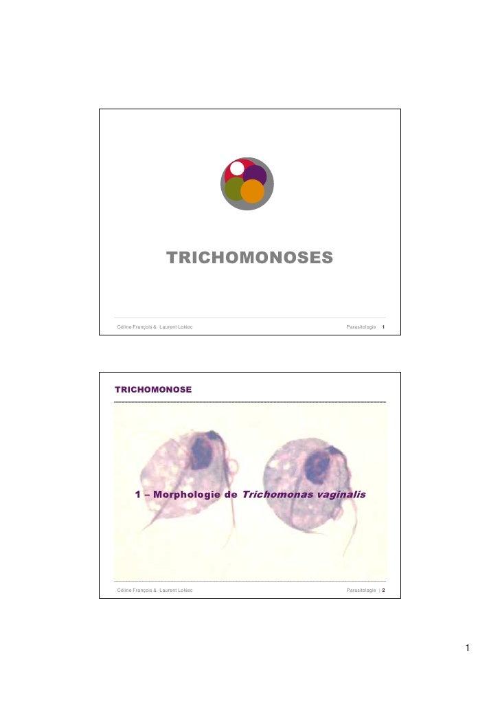 TRICHOMONOSES   Céline François & Laurent Lokiec           Parasitologie   1     TRICHOMONOSE            1 – Morphologie d...