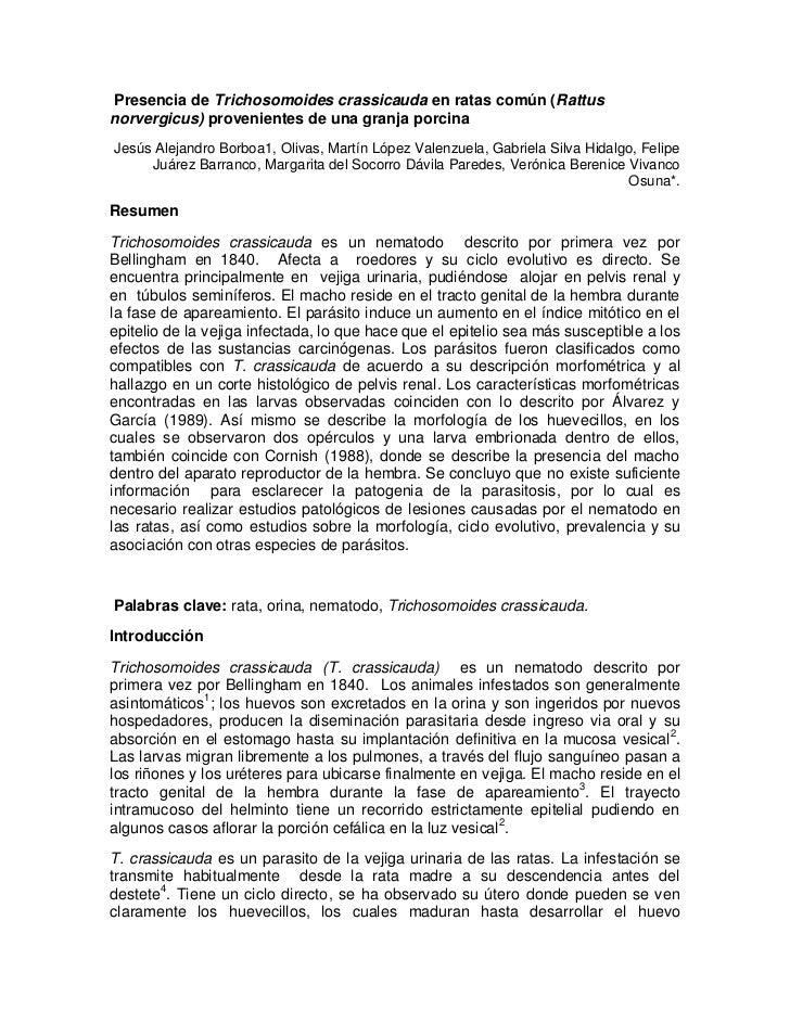Presencia de Trichosomoides crassicauda en ratas común (Rattusnorvergicus) provenientes de una granja porcinaJesús Alejand...