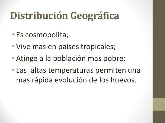 Distribución Geográfica •Es cosmopolita; •Vive mas en países tropicales; •Atinge a la población mas pobre; •Las altas temp...