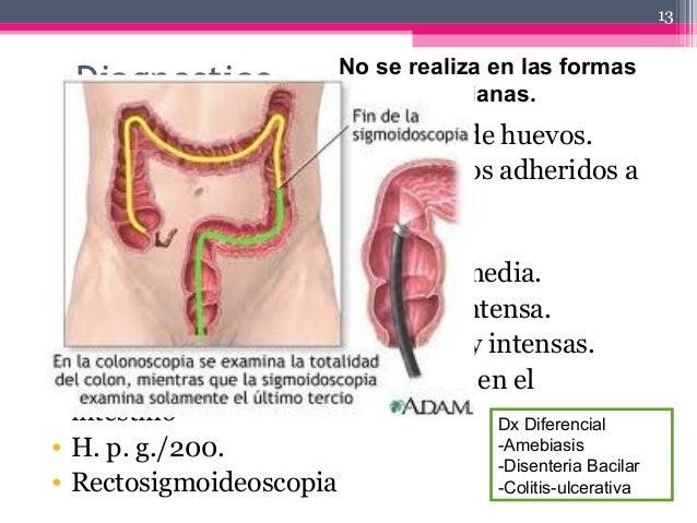 Diagnostico • Examen coprologico  recuento de huevos. • Prolapso rectal  parásitos adultos adheridos a mucosa. • 1,000 h...