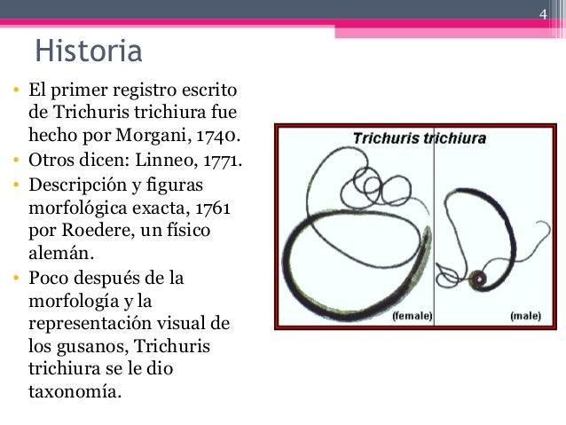 Historia • El primer registro escrito de Trichuris trichiura fue hecho por Morgani, 1740. • Otros dicen: Linneo, 1771. • D...