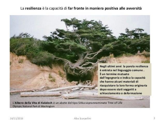 L'Orto Botanico Giardino dei Semplici di Firenze: distruzione e rinascita, un perfetto esempio di resilienza Slide 3