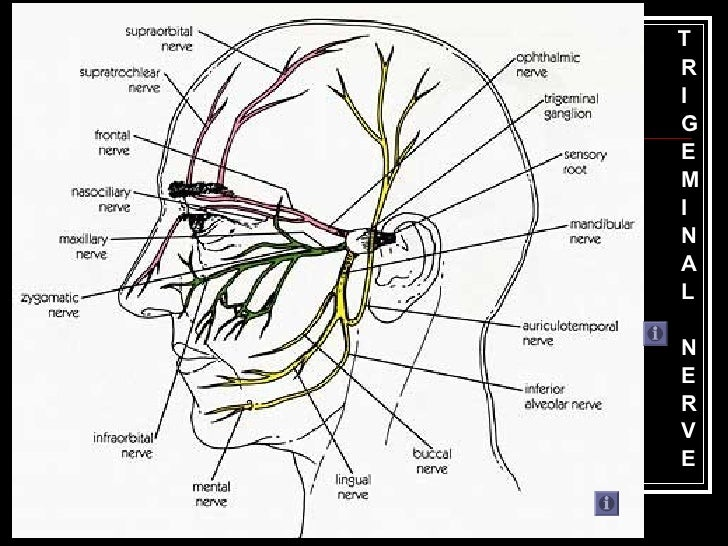 Trigeminal Nerve Mandibular Division Introduction