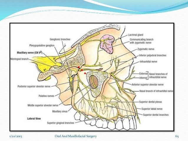 Cranial nerve pathways ppt.