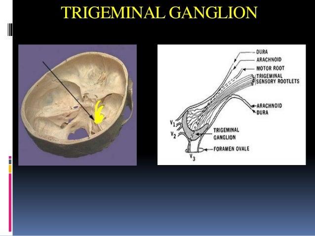 Trigeminal nerve, Glossopharyngeal and Hypoglossal nerves