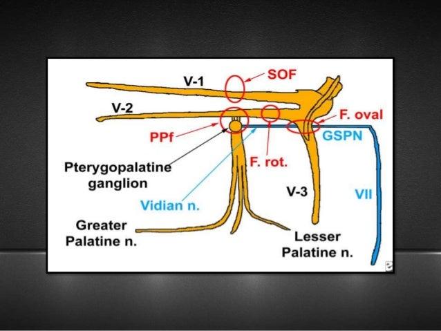 trigeminal nerve and applied anatomy