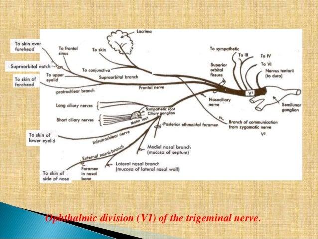 Branch of anatomy