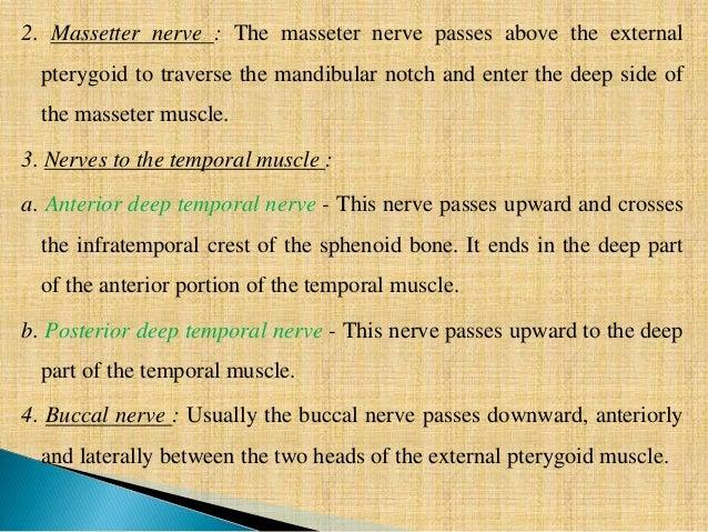 trigeminal nerve- anatomy, Human Body