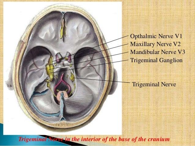 Trigeminal nerve- anatomy