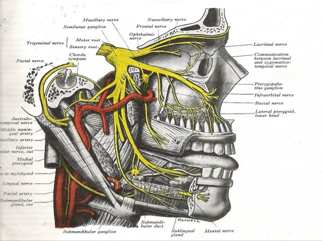 Applied anatomy of facial nerve