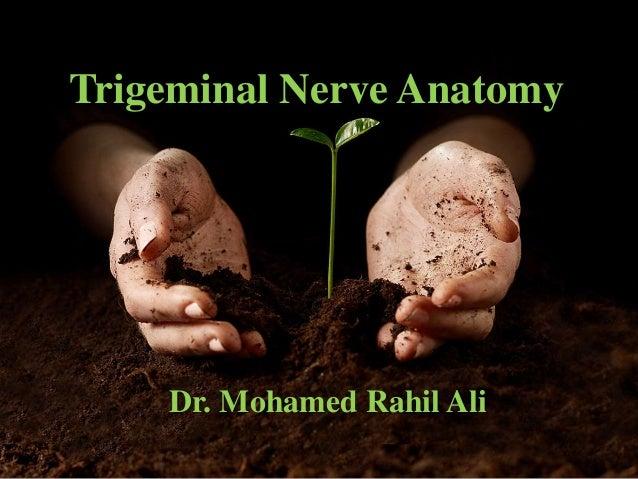 Trigeminal Nerve Anatomy Dr. Mohamed Rahil Ali