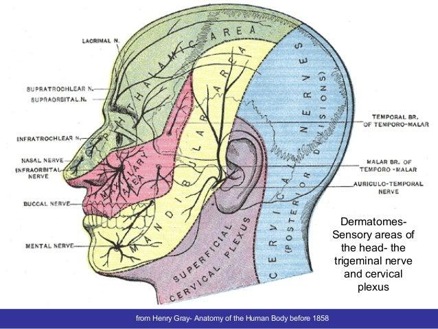 Trigeminal Nociceptive Facilitation