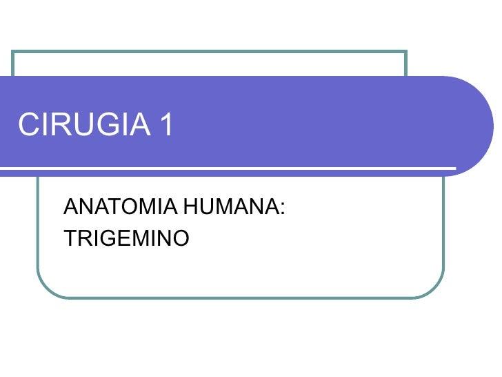 CIRUGIA 1 ANATOMIA HUMANA: TRIGEMINO