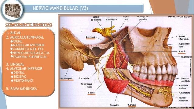 Nervio Trigemino