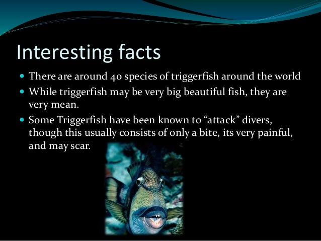 Trigger fish for Interesting facts about fish