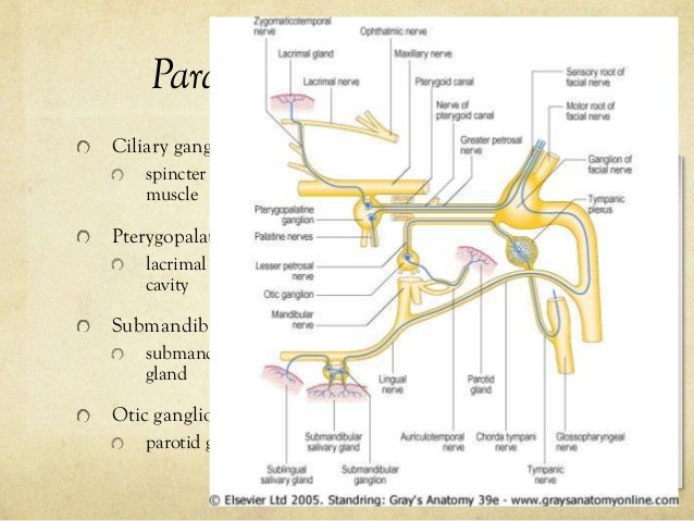 pterygopalatine ganglion