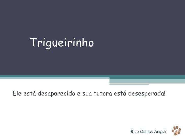 Trigueirinho Ele está desaparecido e sua tutora está desesperada! Blog Omnes Angeli