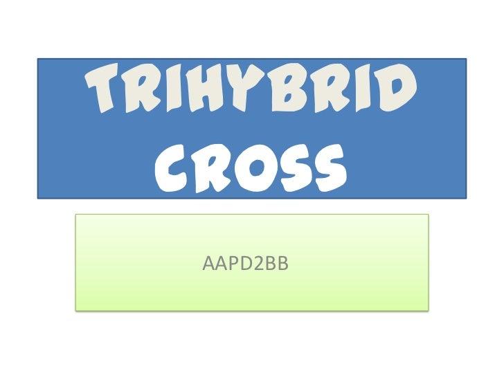 Trihybrid  cross   AAPD2BB