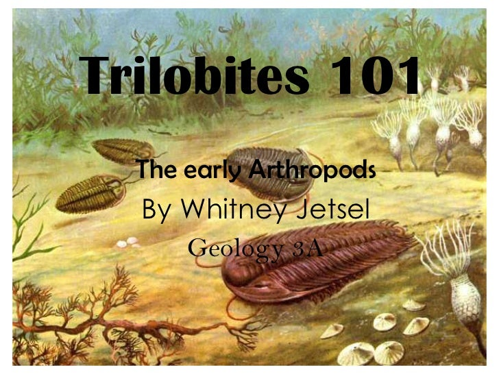 Trilobites 101  The early Arthropods  By Whitney Jetsel      Geology 3A