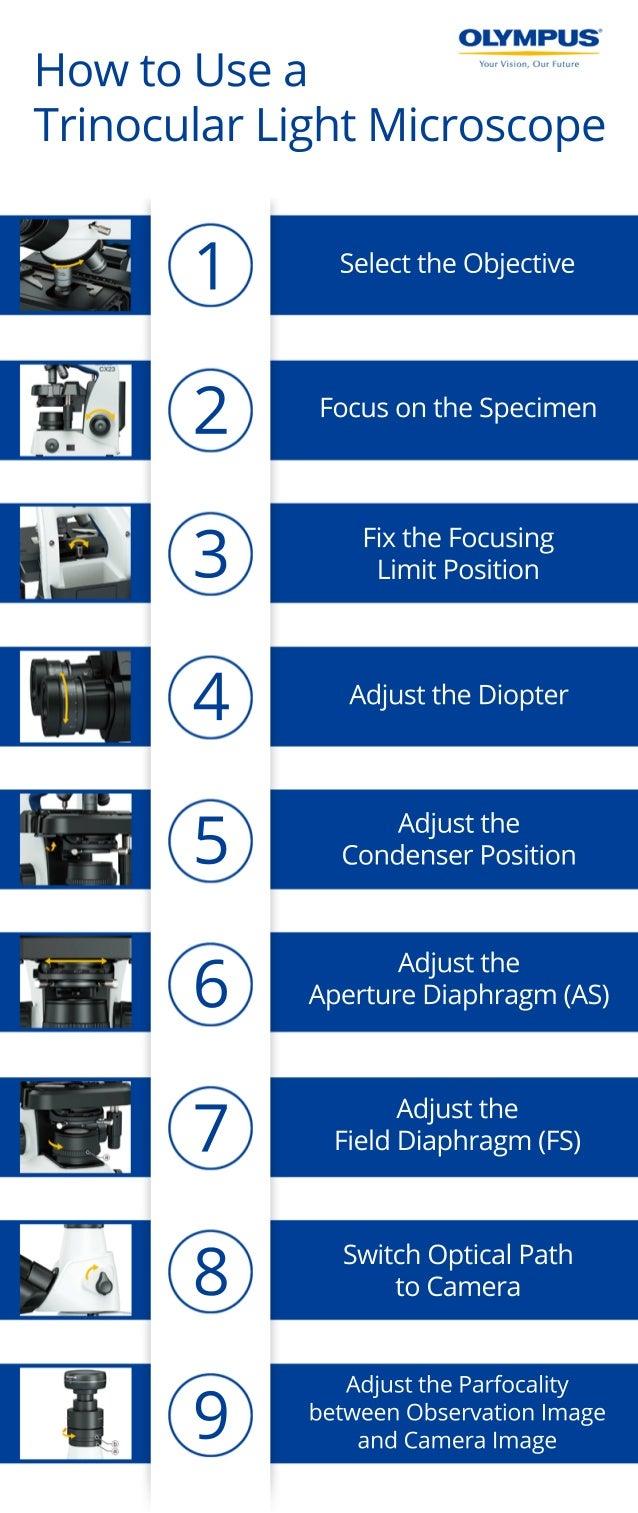 1 SelecttheObjective FocusontheSpecimen FixtheFocusing LimitPosition AdjusttheDiopter Adjustthe CondenserPosition Adjustth...