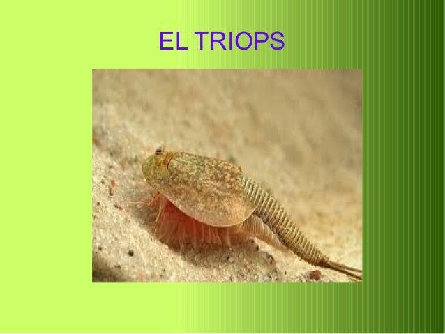 EL TRIOPS