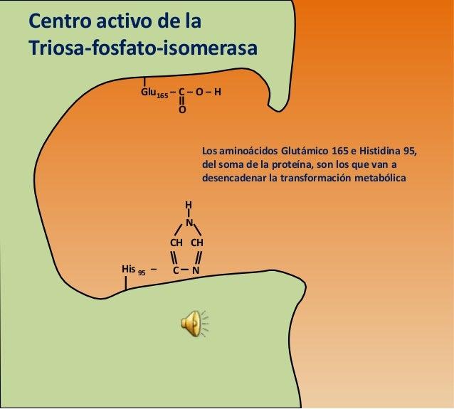 Centro activo de laTriosa-fosfato-isomerasa             Glu165 – C – O – H                     O                          ...