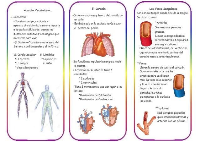 Triptico Del Sistema Circulatorio