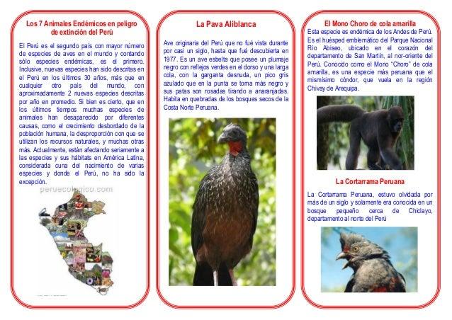Los 7 Animales Endémicos en peligro de extinción del Perú El Perú es el segundo país con mayor número de especies de aves ...