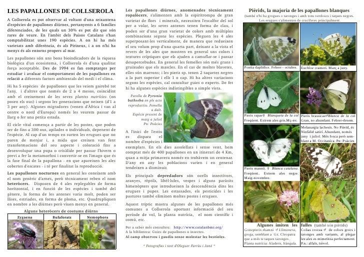 LES PAPALLONES DE COLLSEROLA                                               Les  papallones  diürnes,  anomenades  tècn...